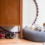 Interiérové vychytávky pro majitele psů 7