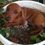 Máte psa - zahradníka? 3