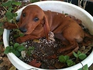 Máte psa - zahradníka? 1