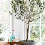 Vypěstujte si nejnovější trendy doplněk olivovník 4