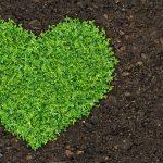 Vylepšete půdu kompostem a zeleným hnojením 4