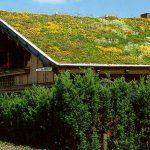 Jak si založit vegetační střechu 14