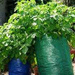 Vyzkoušeli jste už pěstovat zeleninu v pytlích? 4
