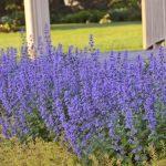 Postarejte se o trvalky, aby kvetly i podruhé 3