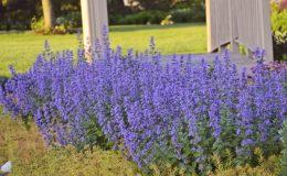 Postarejte se o trvalky, aby kvetly i podruhé 28
