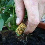 Zahrada na balkoně: Jakou formu hnojiva použít? 3