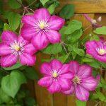 Květy a listy namísto slunečníku 5
