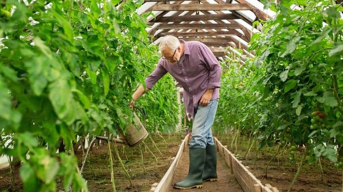 Zelenina ve skleníku 1