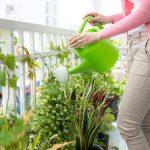 Víte co udělat, aby rostliny netrpěly žízní, dokud budete pryč? 2