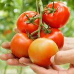 Rajčata, okurky a dýně: Vypěstujte si ty nejlepší plody 5