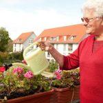 Škůdci a choroby balkonovek: Zatočte s mšicemi! 2
