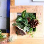 Bylinky v rámečku: Oživte si kuchyň kouskem zeleně 3