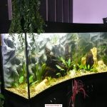 Designové akvárium pro odbourání stresového onemocnění 7