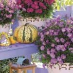 Astry nezklamou! Právo na krásný podzimní balkon 2