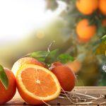 Dočkáte se plodů, pokud zasadíte semínko pomeranče? 5