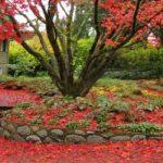Zahrádka na podzim - co se zeleným odpadem 7