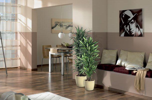 Exotická rostlinná oáza rovnou doma? Udělejte si ji i v zimě 1