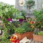 Pěstovat si zeleninu doma na balkoně? Není to nic složitého 2