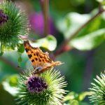 Vyhrajte boj s plevelem: Nevytrhávejte ale vykopávajte 3