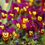 12 rostlin, které spolehlivě vybarví vaši zahradu na podzim 2