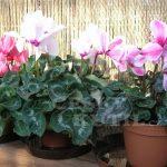 Pro sladké sny: Těchto 5 pokojových rostlin uklidní váš organismus a přinese kvalitní spánek! 7