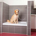 Sprcha pro psa: Jak bezpečně umýt miláčka a na co si dát pozor? 34