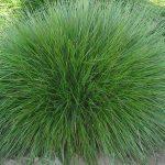Jak v zahradě pěstovat okrasné trávy 7