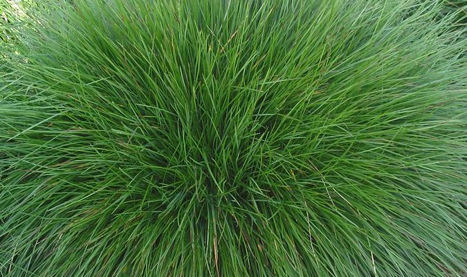 Jak v zahradě pěstovat okrasné trávy 1