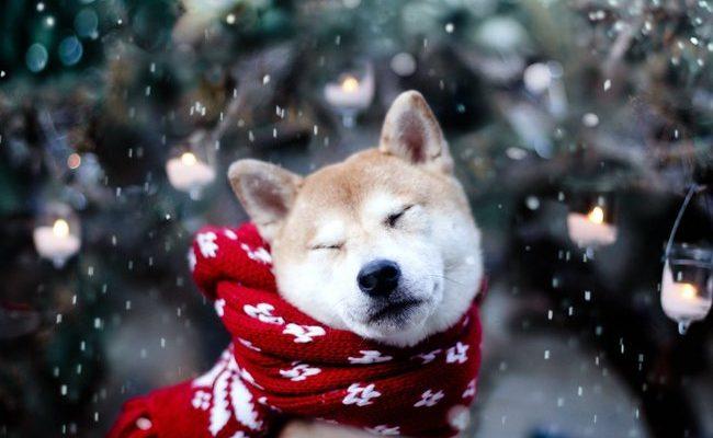 Umíte se postarat o domácího mazlíčka během zimy? 1