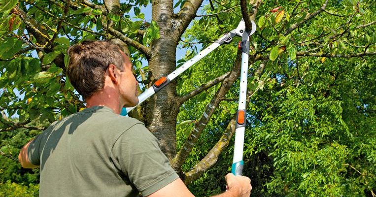 Zdravé stromy a štědrá úroda? 1