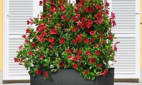 Samozavlažovací květináče a truhlíky 3