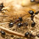 Jak se zbavit mravenců u Vás doma 2
