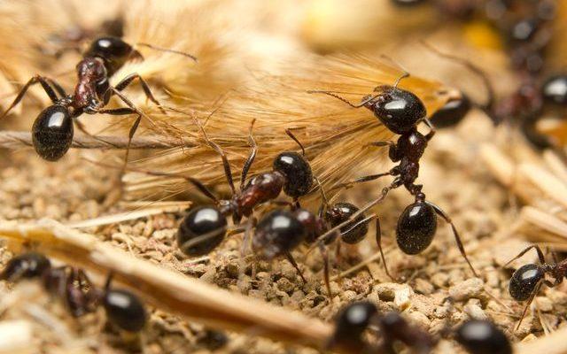 Jak se zbavit mravenců u Vás doma 1