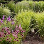Okrasné trávy na jaře 2