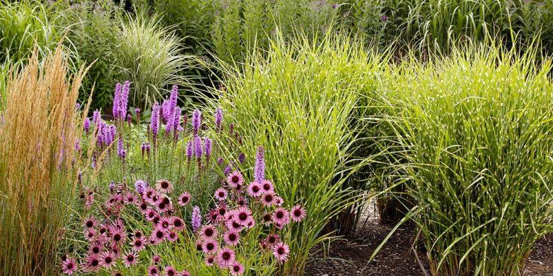Okrasné trávy na jaře 1