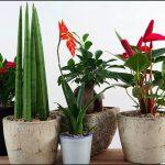 Jak mít pokojové rostliny vždy dokonale krásné 4