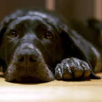 Podlahy vhodné pro majitele psů a koček 6