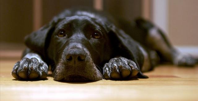 Podlahy vhodné pro majitele psů a koček 1