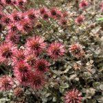 Víte, které rostliny můžete použít místo trávníku? (2. část) 5