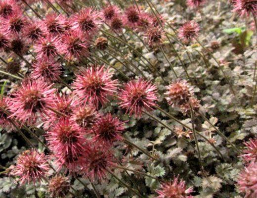 Víte, které rostliny můžete použít místo trávníku? (2. část) 1