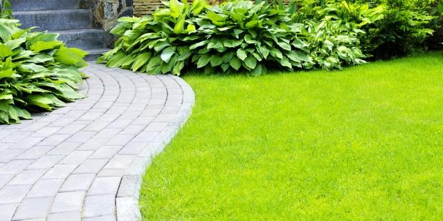 Co potřebuje dokonalý trávník 1