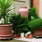 Vyneste pokojové rostliny na balkon, prospěje jim to 7