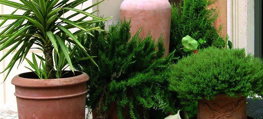 Vyneste pokojové rostliny na balkon, prospěje jim to 1