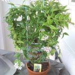 Pokojové rostliny: Představujeme 8 nejzvláštnějších druhů 6