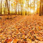 Už nikdy nesbírejte podzimní listí z vaší zahrady, musí zůstat tam, kde je 4