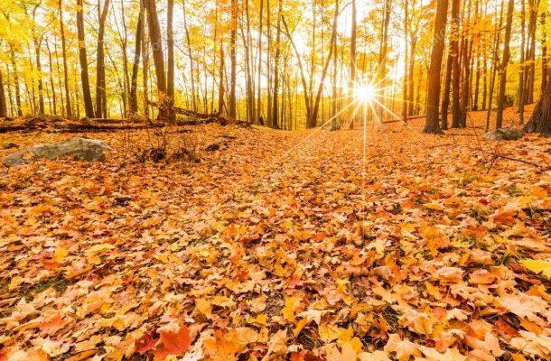 Už nikdy nesbírejte podzimní listí z vaší zahrady, musí zůstat tam, kde je 1