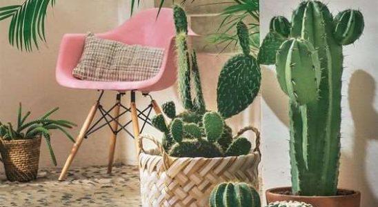 Pokud chcete být zdraví, pořiďte si domů tyto rostliny, zachrání vás 10
