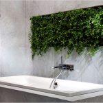 Rostliny v koupelně 9
