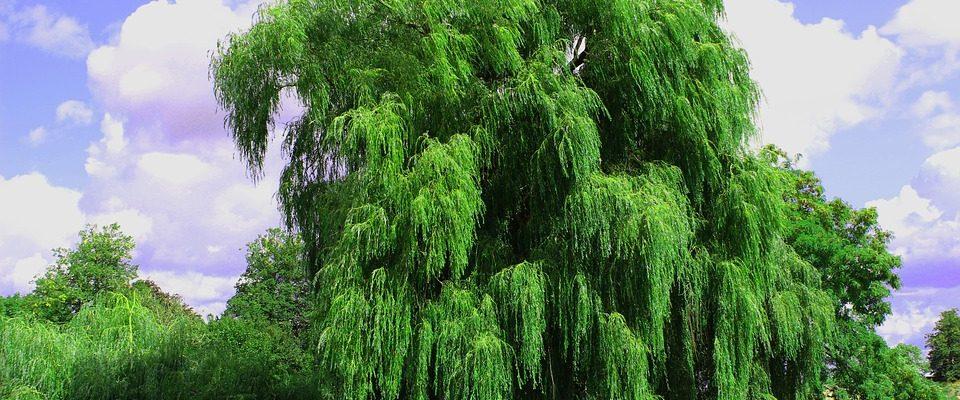 Tento strom by si měl v roce 2019 zasadit každý z vás 1
