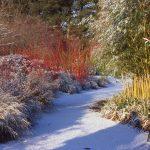 Co je zapotřebí udělat se zahradou dokud nesněží 6